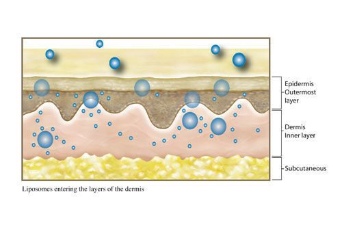 Liposome-skin-illustration